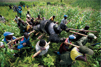 Brent-stirton-world-press-photo-2008